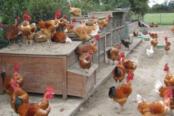 Poulailler Ferme des Bruyères Vitry